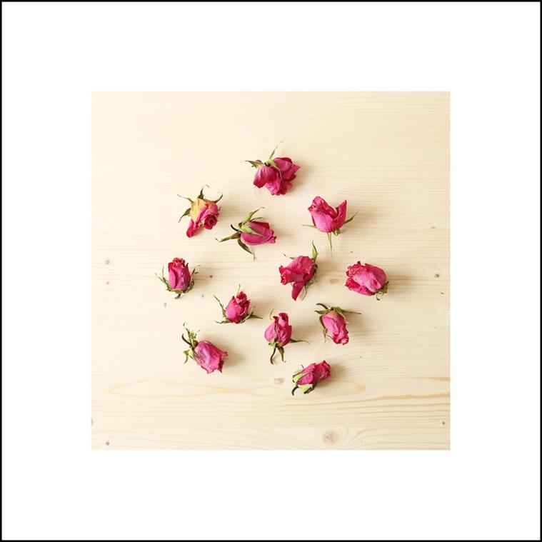 roses1